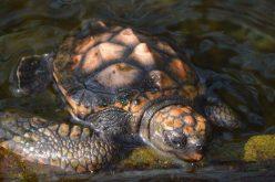 Bobbing baby turtle has scientists perplexed