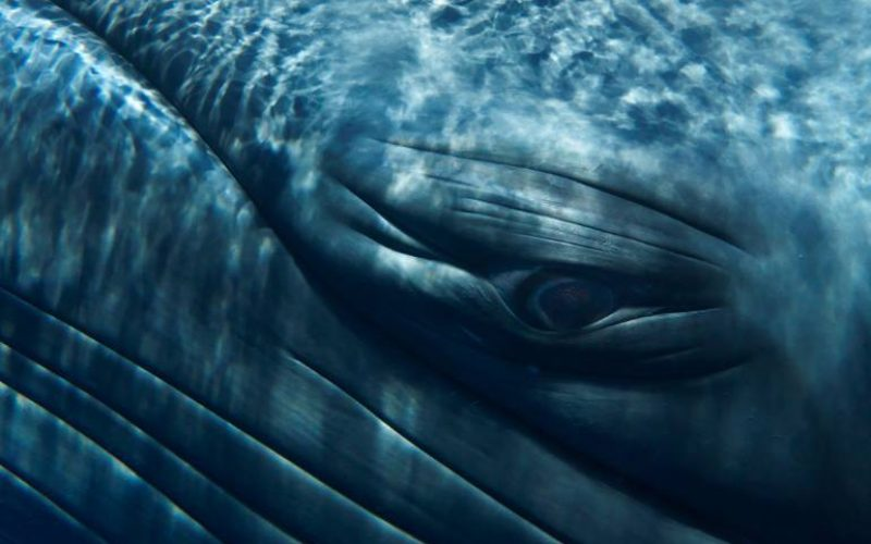 Vital role of whales