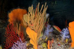 Offshore exploits threaten marine life