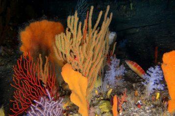 Marine Protected Areas: Latest news
