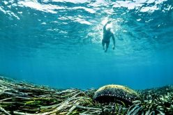 Environmental Affairs department fails to protect oceans