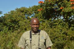 Sneak beak: A birdwatcher's story