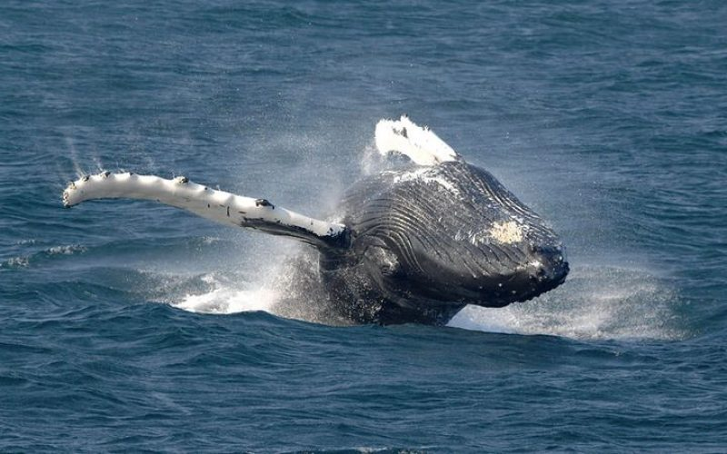 New tech helps with whale research projects