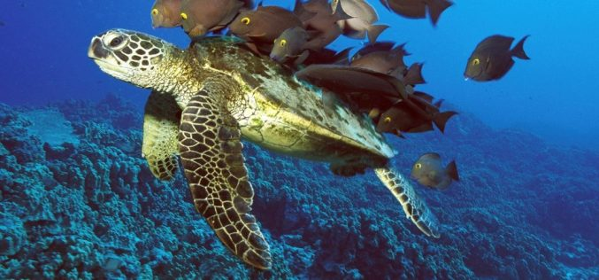Loggerheads navigate using GPS