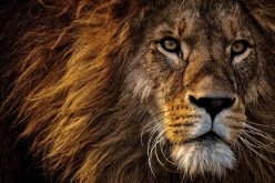 Claws out at lion trade colloquium: hearing in detail