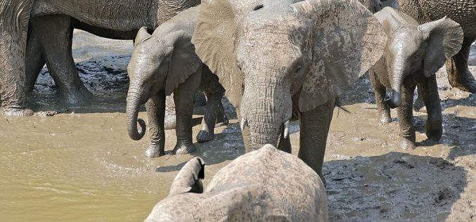 Conservationists face up to jumbo problems