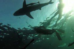 Crash-dive course in shark awareness