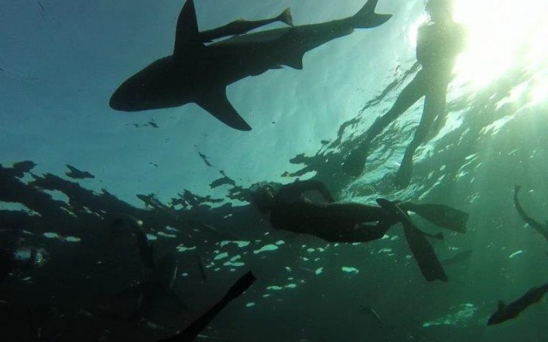 Crash-dive course in shark awareness