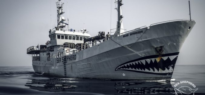 Sea Shepherd skipper on film fest bill