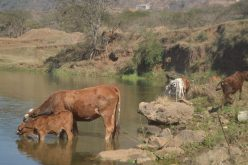 """VALLEY LOW: Small-scale farmers worry they will not be compensated for """"losses"""""""