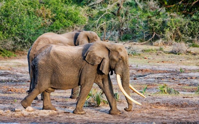 Park expansion holds hope for Africa's big tuskers