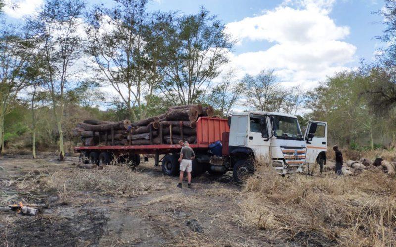Win in war on logging pirates