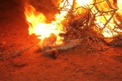Alarm over mass vulture poisoning in Zululand
