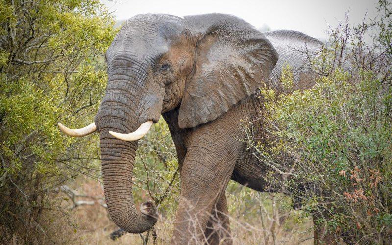 Jumbo blow for Zululand reserve: Bull elephants kill conservationist