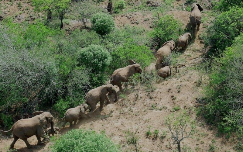 International bid to save Mawana elephants