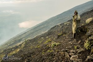 DRC rangers killed