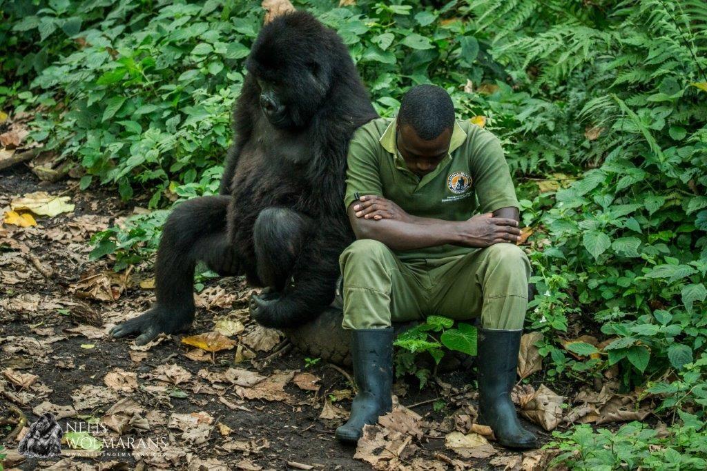 Virunga DRC rangers killed