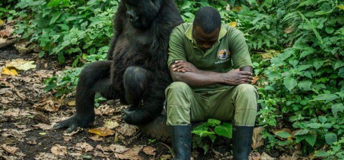 Fallen rangers: <br> Deadly militia attack in Virunga
