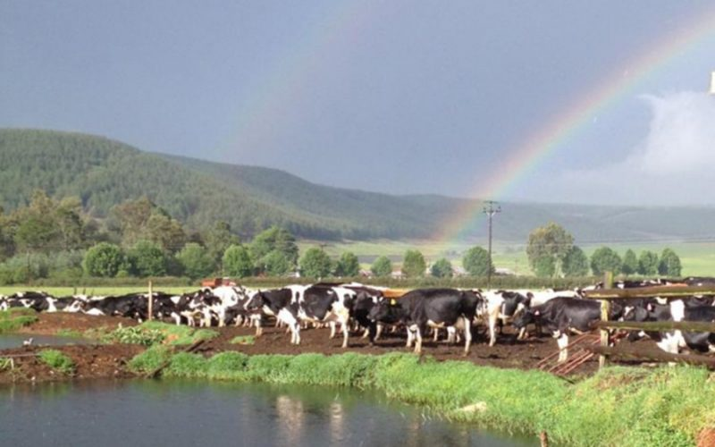 Rainbow's end? <br> Dairymen rise to Covid-19 challenge but question own future