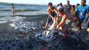 Shark rescued from seine nets during sardine run