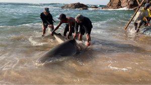 Shark returned to ocean