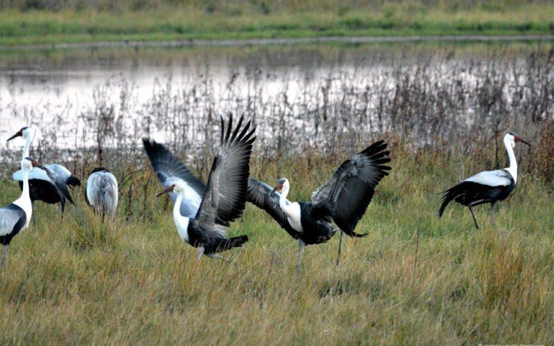 Spectacular birders' paradise