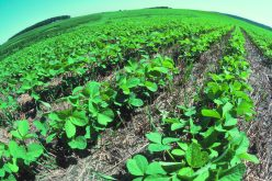Farmers still shudder at harm caused by DDT