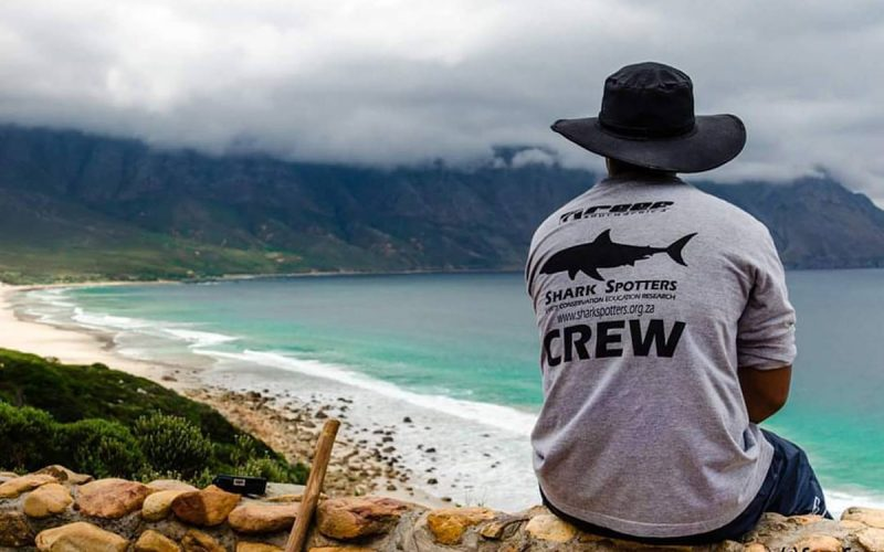 Spotted! <br> How a surfer's project turned the tide on shark fears