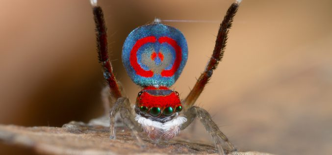 Hiya ladies, I am in a wooing mood! <br> . . . Spider love can be so strange