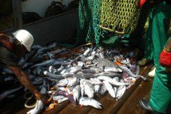 Bycatch threat to apex predators