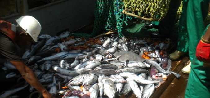 Bycatch threat to apex predators