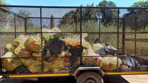 Rubbish collected in river clean-up