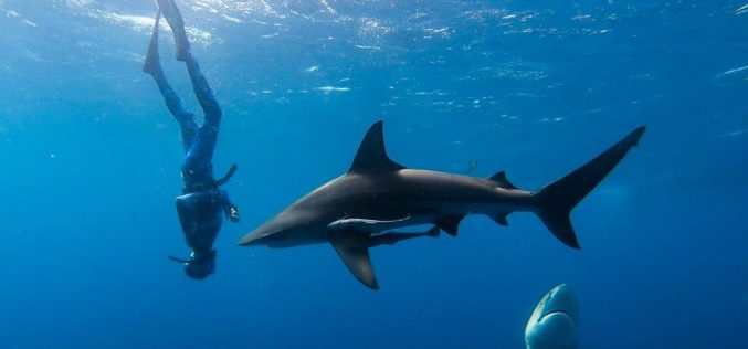 Covid shark video lands the WHO in hot water