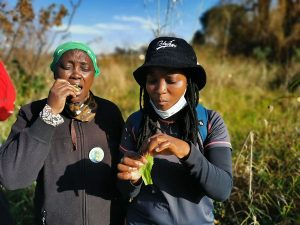 JUST DANDY: Sthembile Shabalala and Nqobile Mlaba reap the benefits of dandelion leaves.